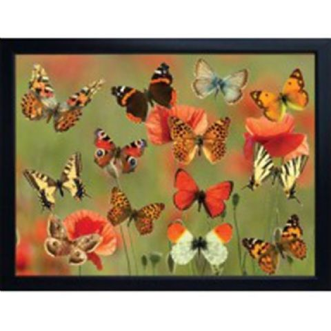 BUTTERFLIES 3D FRIDGE MAGNET